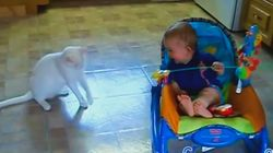 고양이를 보고 '빵!' 터진 아기들