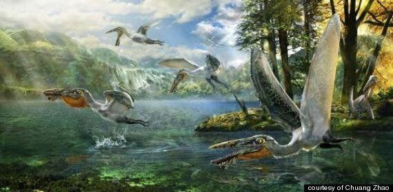 '아바타'의 이크란을 닮은 익룡 화석
