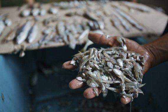 추석 밥상에 오르는 생선의
