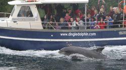 돌고래보다 사람과 친한 돌고래 '펑기'