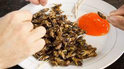 식용벌레, 먹을 준비