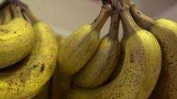 곰팡이 대공습, 바나나와 커피가