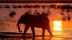 코끼리는 멸종을 향해