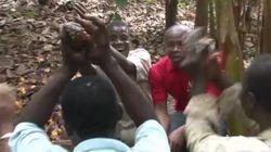 코코아 농장 노동자들이 생애 처음 초콜릿을