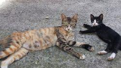 우리 집 마당에 살고 있는 6마리의 길고양이