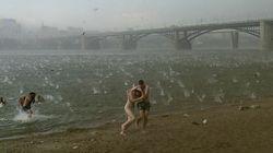 시베리아 해변을 초토화시킨 '공포의