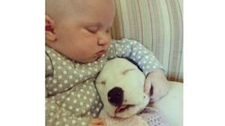 태어날 때부터 붙어지낸 이 아기와 핏불은 아직까지 친구다(사진,
