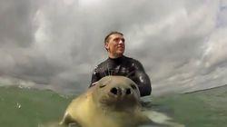 새끼 바다표범이 서핑에 합류하다