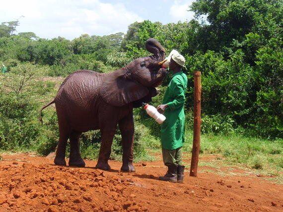 '무거운 인생' 코끼리를