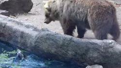 곰, 물에 빠진 까마귀