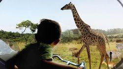 덴마크에 우리 없는 동물원