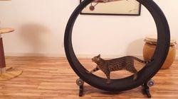 고양이 전용 러닝머신!