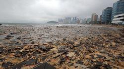 해운대 폐목재 파도 : 해운대 해수욕장을 뒤덮은 폐목재