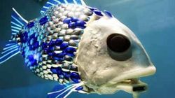 4대강 로봇물고기, 알고보니