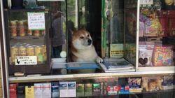 우리동네 담배가게 강아지(사진,