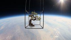 우주를 비행하는 분재의 아름다움