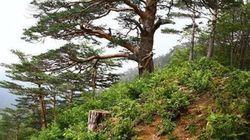 '오프라인 포토샵' | 소나무