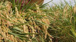 정부, 내년부터 쌀시장