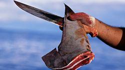 샥스핀 요리가 상어를