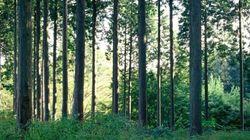 편백나무에 아토피 치료 물질
