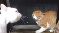 이 고양이는 인간의 말을 한다
