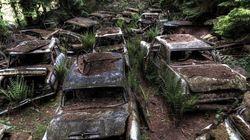 벨기에의 어느 숲에는 자동차 무덤이