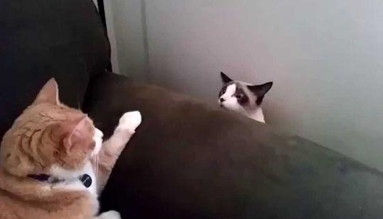 고양이들의 어색한, 정말 어색한 첫
