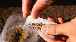 콜로라도에서 합법화된 대마초,