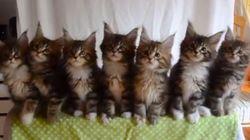 싱크로나이즈드 고양이!