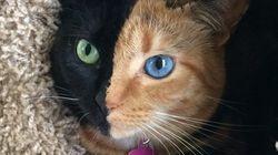 두 얼굴을 가진 스타 고양이, 이름은
