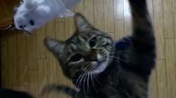 수직으로 2m를 점프하는 고양이