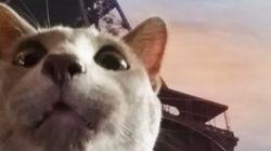 이제는 고양이 셀카 '캣시'에