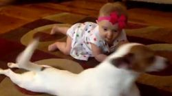 개가 아기에게 기는 법을
