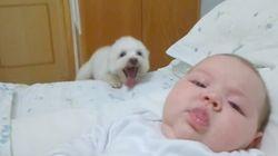 강아지도 신생아의 얼굴이