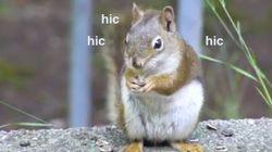 동물의 딸꾹질은 귀엽다. 도에 지나칠