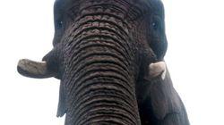 세계 최초의 코끼리