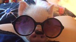 아기 돼지 주드의 졸린 하루