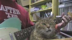기타 선율에 혼이 빠진 고양이