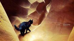 최고의 등반 파트너는 고양이다!
