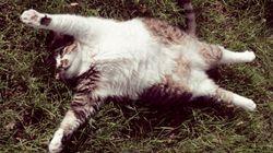고양이와 포옹하는 17가지 방법