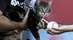 소년을 구한 고양이, 시구를 하다!