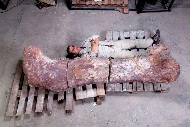 역사상 최대 크기 공룡 화석