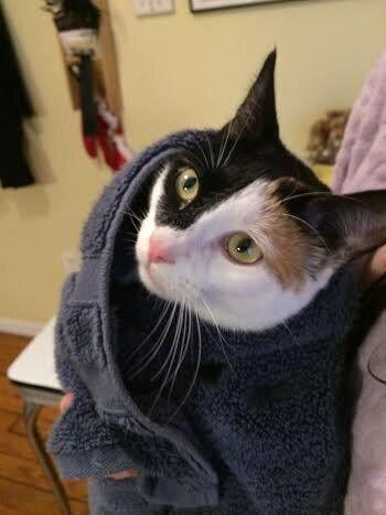고양이 부리토가 뭔지