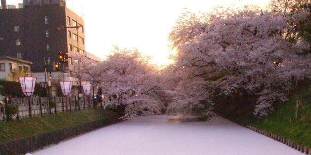 히로사키 공원의 벚꽃축제 : 벚꽃으로 만든