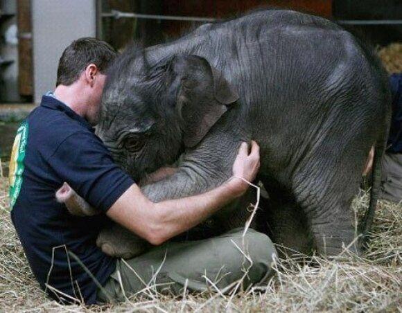 동물을 보호해야 하는 가장 강력한 이유