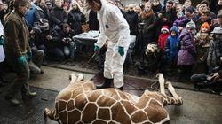 덴마크 동물원은 왜 계속 동물을