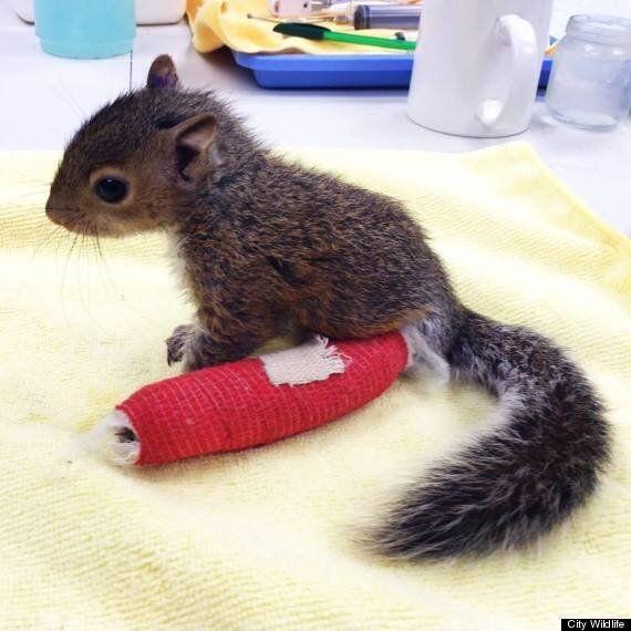 아기 다람쥐가 빨간 깁스를 한