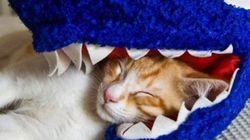 고양이의 낮잠자는 법