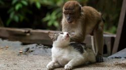 고양이를 마사지 하는