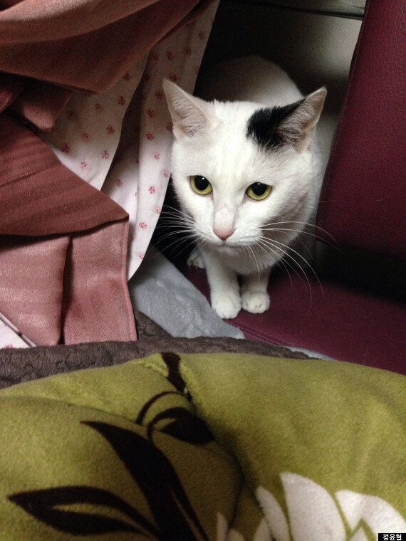 고양이는 왜 평생을 집안에서만 살 수